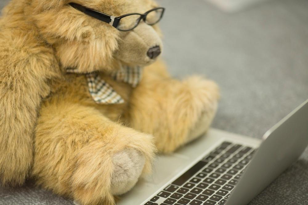 Startup_Bear