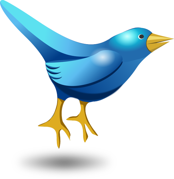 twitter bird optimised