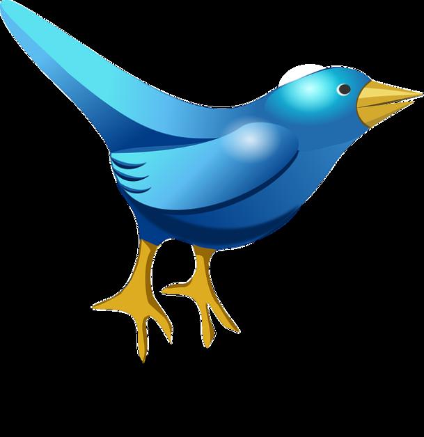 twitter bird optimised
