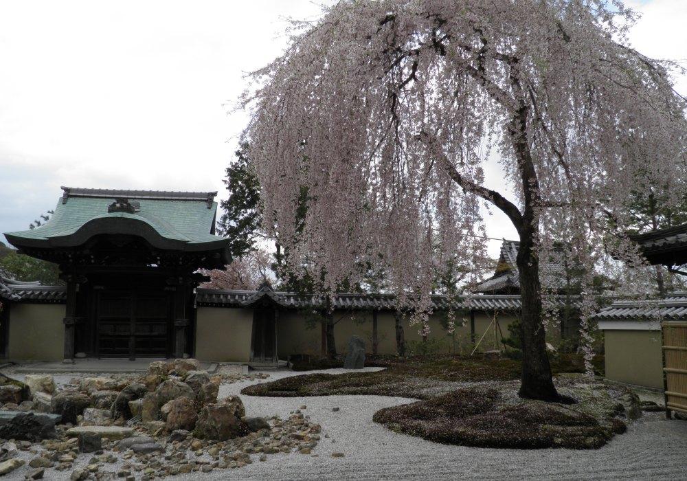 Zen garden photo for Thisissamstown